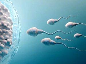 Son araştırma erkekleri derinden üzecek! Koronavirüsün testislerde uzun
