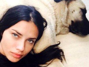 Sivaslılar'dan Adriana Lima'ya:Kangal hediye edelim