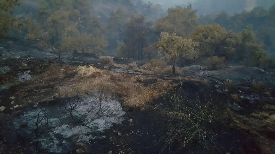Yangın 2 can aldı. İşte Trodos'taki büyük yangından fotoğraflar galerisi resim 13