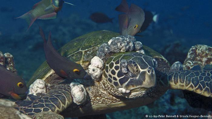 Denizlerde kitlesel ölüm alarmı! galerisi resim 3