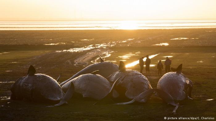 Denizlerde kitlesel ölüm alarmı! galerisi resim 6