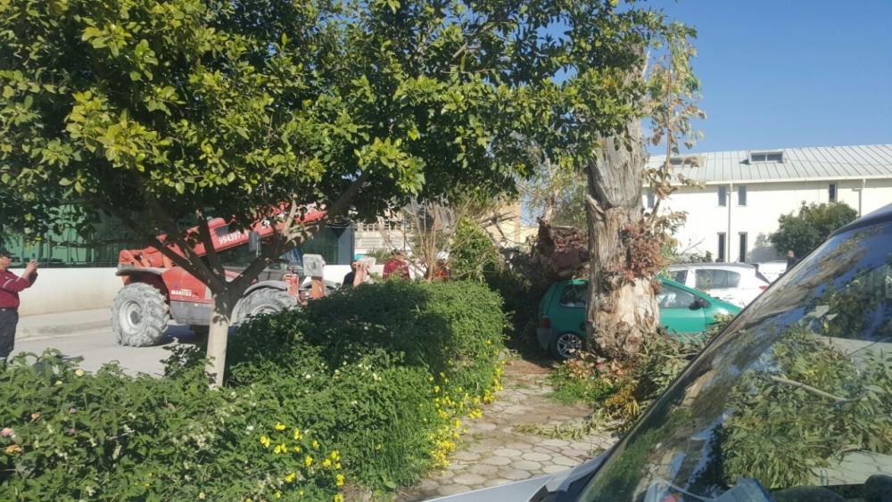 Okaliptüs ağacı devrildi, 5 araç hasar gördü galerisi resim 2