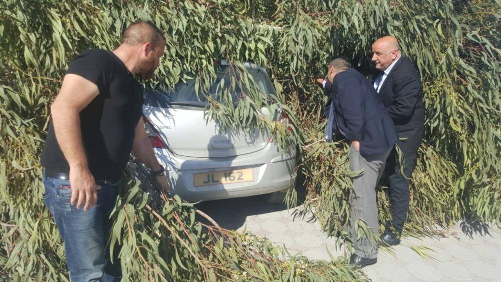 Okaliptüs ağacı devrildi, 5 araç hasar gördü galerisi resim 3