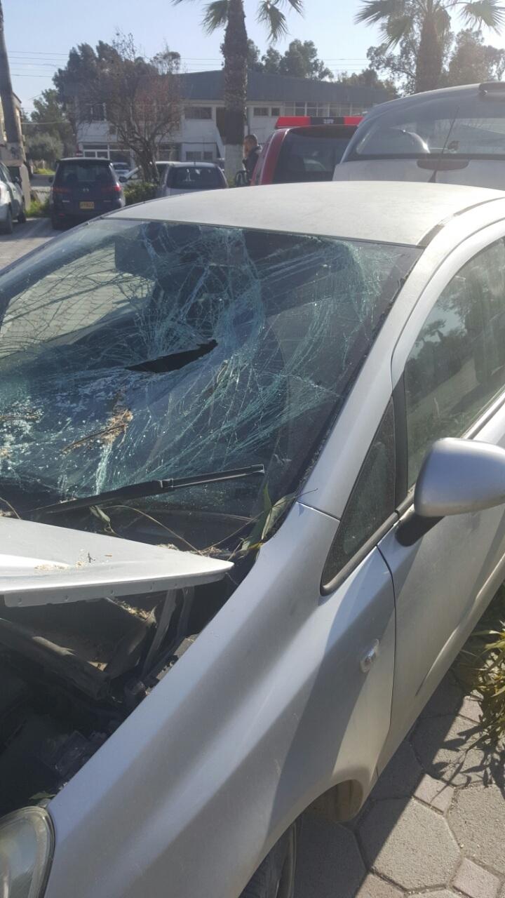 Okaliptüs ağacı devrildi, 5 araç hasar gördü galerisi resim 4