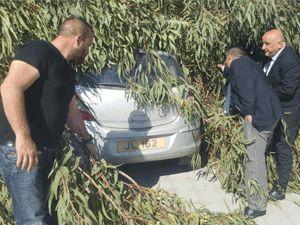 Okaliptüs ağacı devrildi, 5 araç hasar gördü