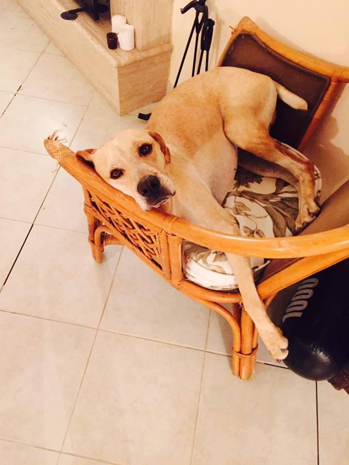 Buddy yeni hayat arkadaşını arıyor! galerisi resim 7