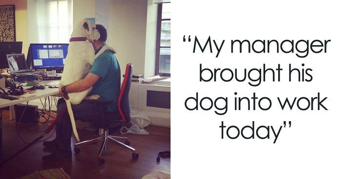 Dünyanın en garip köpek cinsi: Boksörler galerisi resim 1