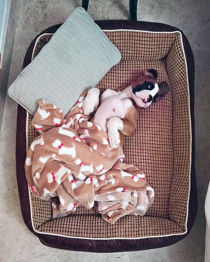 Dünyanın en garip köpek cinsi: Boksörler galerisi resim 103