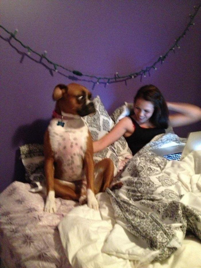Dünyanın en garip köpek cinsi: Boksörler galerisi resim 110