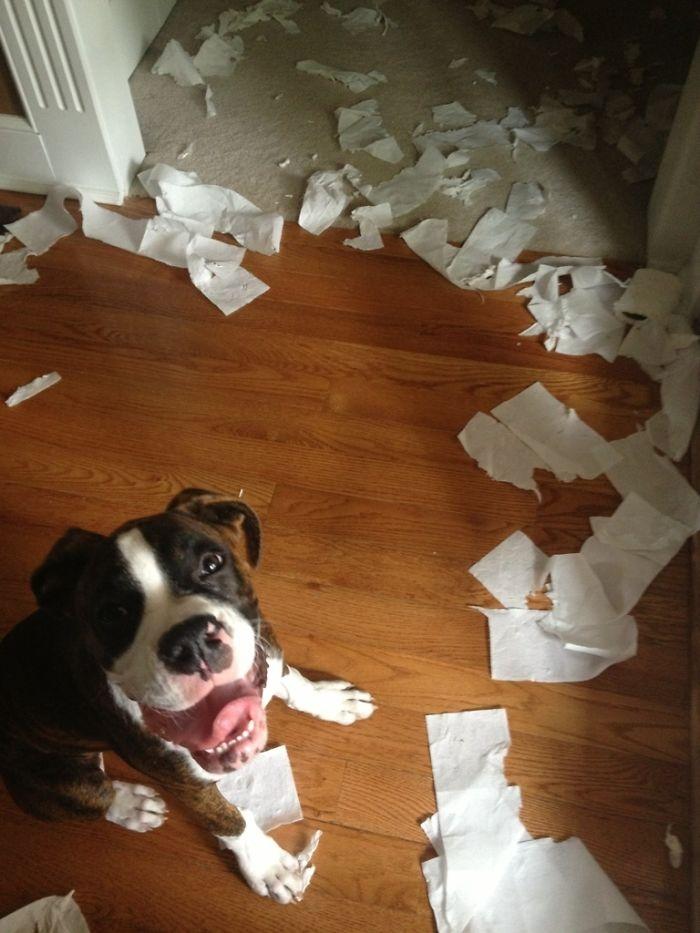 Dünyanın en garip köpek cinsi: Boksörler galerisi resim 155