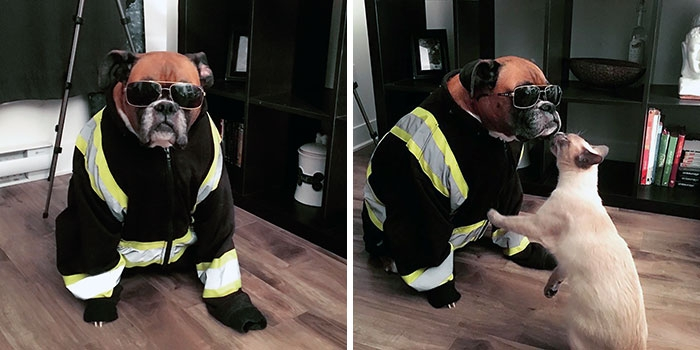 Dünyanın en garip köpek cinsi: Boksörler galerisi resim 165