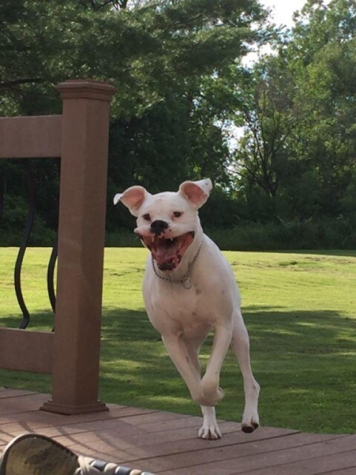 Dünyanın en garip köpek cinsi: Boksörler galerisi resim 176