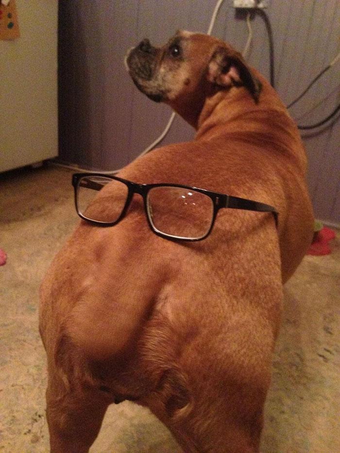 Dünyanın en garip köpek cinsi: Boksörler galerisi resim 209