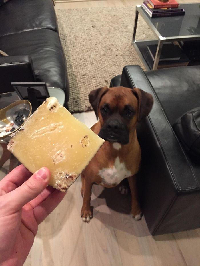 Dünyanın en garip köpek cinsi: Boksörler galerisi resim 87