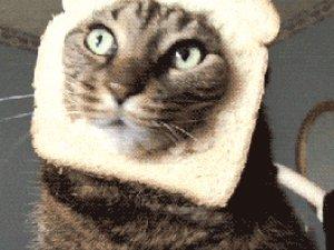 En komik kedi videoları