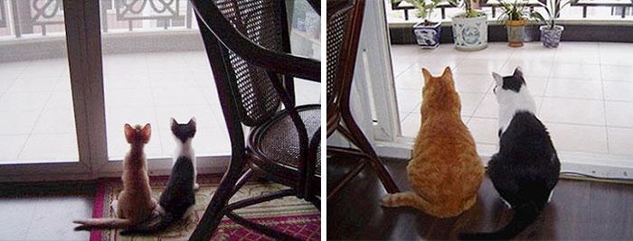 Birlikte Büyüyen Hayvanların  Öncesi ve Sonrası galerisi resim 1