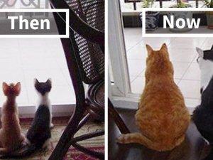 Birlikte Büyüyen Hayvanların  Öncesi ve Sonrası