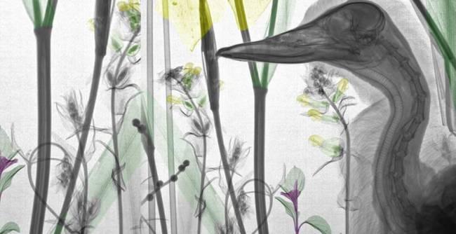 Doğaya Bakışınızı Değiştirecek 15 X-RAY Görüntüsü galerisi resim 13