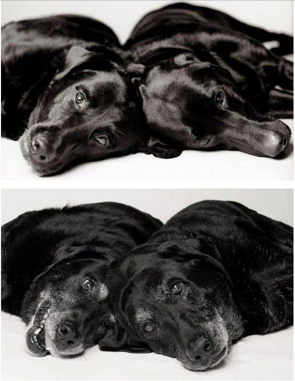 Köpekler nasıl yaşlanır ? galerisi resim 1