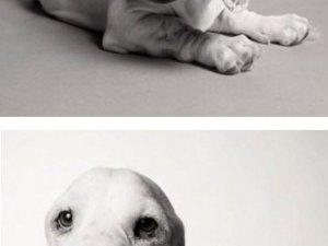 Köpekler nasıl yaşlanır ?