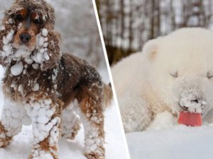 ilk defa kar gömüş aşırı tatlı 20 hayvan