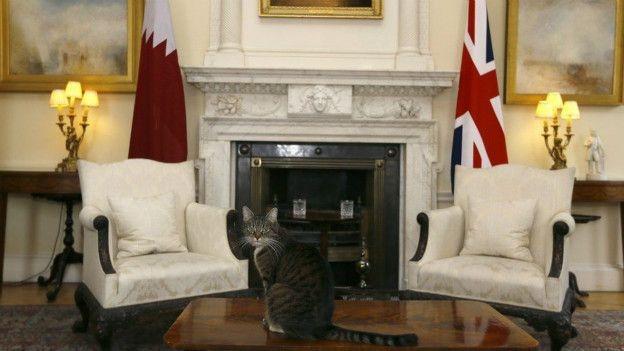 İngiltere Dışişleri Bakanlığı 'fare avcısı' bir kediyi kadroya galerisi resim 1