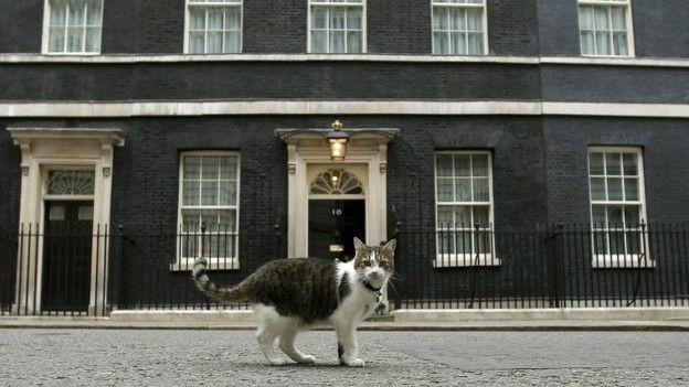 İngiltere Dışişleri Bakanlığı 'fare avcısı' bir kediyi kadroya galerisi resim 3