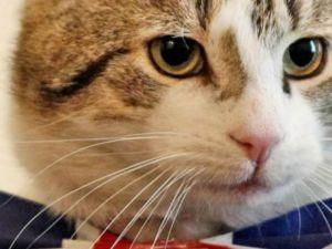 İngiltere Dışişleri Bakanlığı 'fare avcısı' bir kediyi kadroya