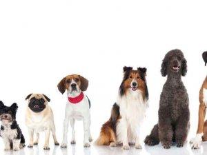 Köpek sevgisi, nasıl 200 canlı türünü yok olmanın eşiğine getirdi?