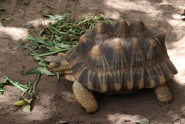 Kaplumbağa köyü! Ziyaretçi akınına uğruyor galerisi resim 1