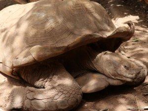 Kaplumbağa köyü! Ziyaretçi akınına uğruyor