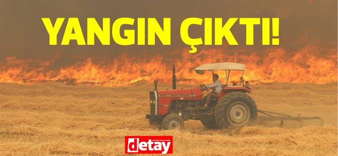İskele Altınova'da yangın, itfaiye müdahale ediyor!