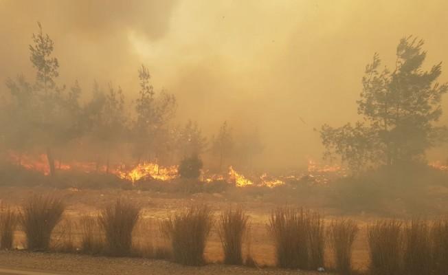 Tepebaşı'nda büyük orman yangını!