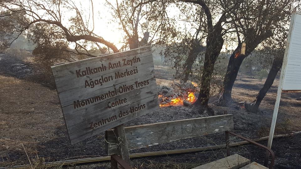 'Kral' ağaç yandı, Kraliçe ise kurtuldu!