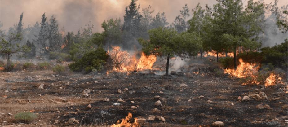 Güney Kıbrıs'ta Şüpheli Yangınlar