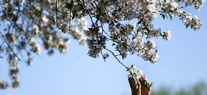 Floransa'da Covid-19 nedeniyle hayatını kaybeden her kişi için bir ağaç dikiliyor