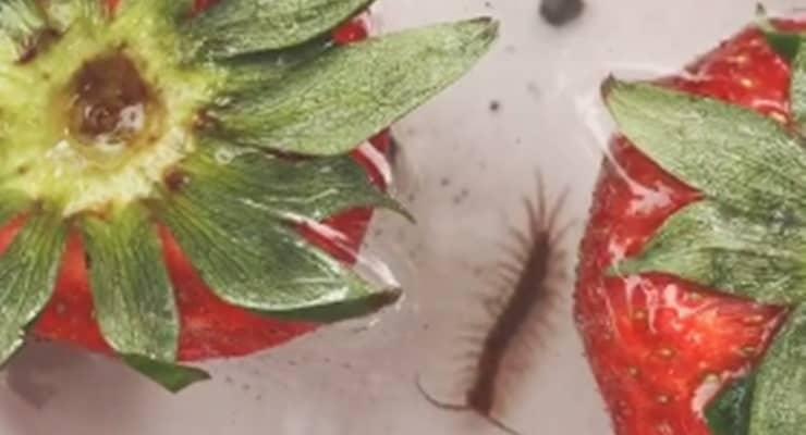 Çilek videosundaki büyük böcekler sonradan konmuş