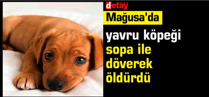 Gazimağusa'da, yavru köpeği sopa ile döverek öldürdü