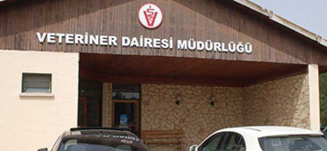"""Veteriner Dairesi'nden """"itlaf"""" açıklaması ve sosyal medyadaki iddialara yanıt..."""