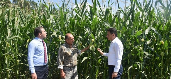 Tarım ve Doğal Kaynaklar Bakanı Oğuz, mısır üretim alanında incelemede bulundu