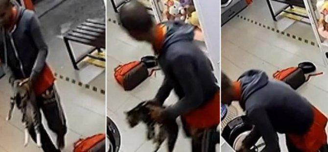 Üç çamaşır makinesinde üç kediyi öldürdü: Üç yıl hapis yatabilir