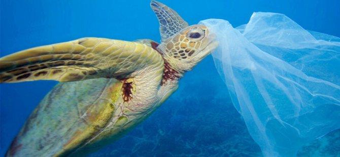 Denizlerdeki  kirliliğinin esas sorumlusu Otomobil lastikleri