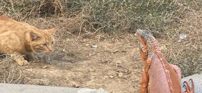 Üsküdar'da bulunan iguanaya 'Bayram' ismi verildi