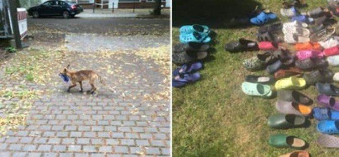100'ü aşkın ayakkabı ve terlik çalan tilki 'suçüstü yakalandı'