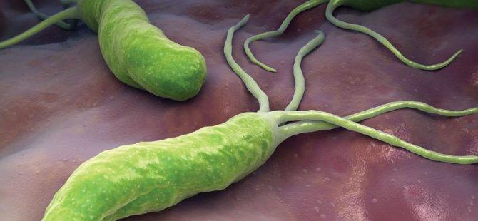 Bu bakteri iki kişiden birinin vücudunda var; senelerce belirti vermeden yaşıyor, kansere neden olabiliyor!