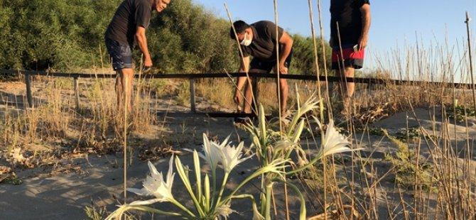 Herdaimdostlar Halkı  Kum Zambakları Hakkında Bilgilendirmek Amacıyla Diktiği Pano ve Koruma Çitlerinin Bakımını Yaptı