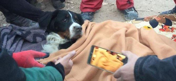 Depremde Enkazdan Kurtarılan Gizem, Köpeği Ares'e Kavuştu