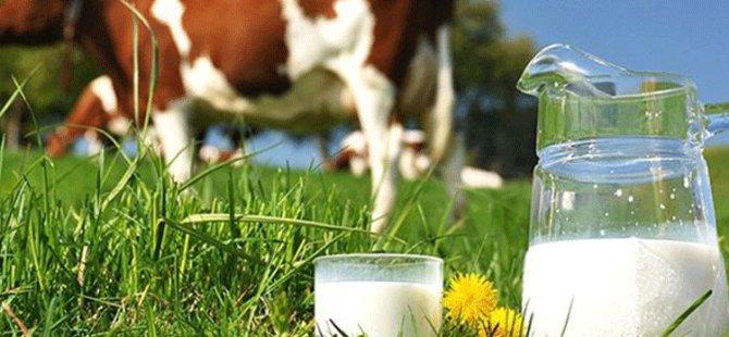 Süt Bedellerinin %50'si Bugün Ödeniyor