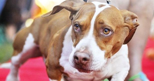 Köpeği Öldürdü, 6 Ay Hapis Yatacak
