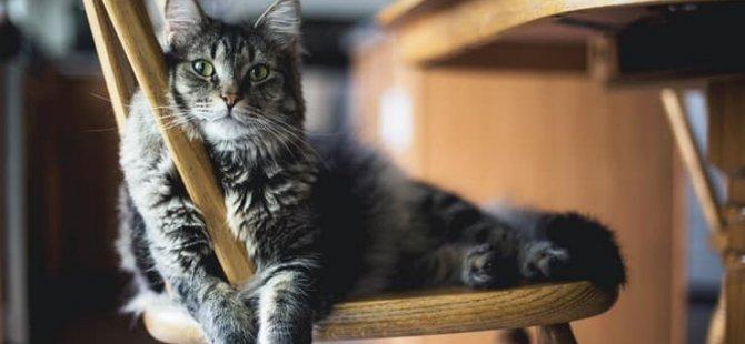 Avustralya'da bir adam kayıp kedisini bulmak için askeri teçhizat ile hayvan barınağını bastı